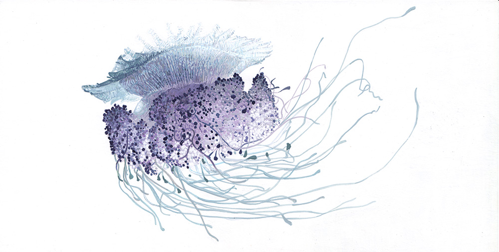 Jellyfish 05 Cauliflower Jellyfish Drawing Illustration