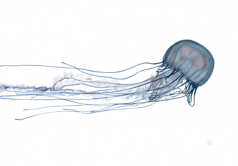 Jellyfish The Life Underwater Drawing Illustration
