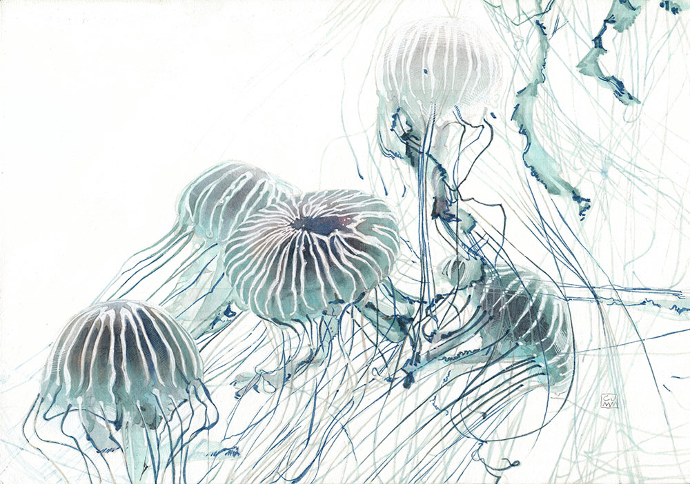 Jellyfish 02 The Life Underwater Drawing Illustration