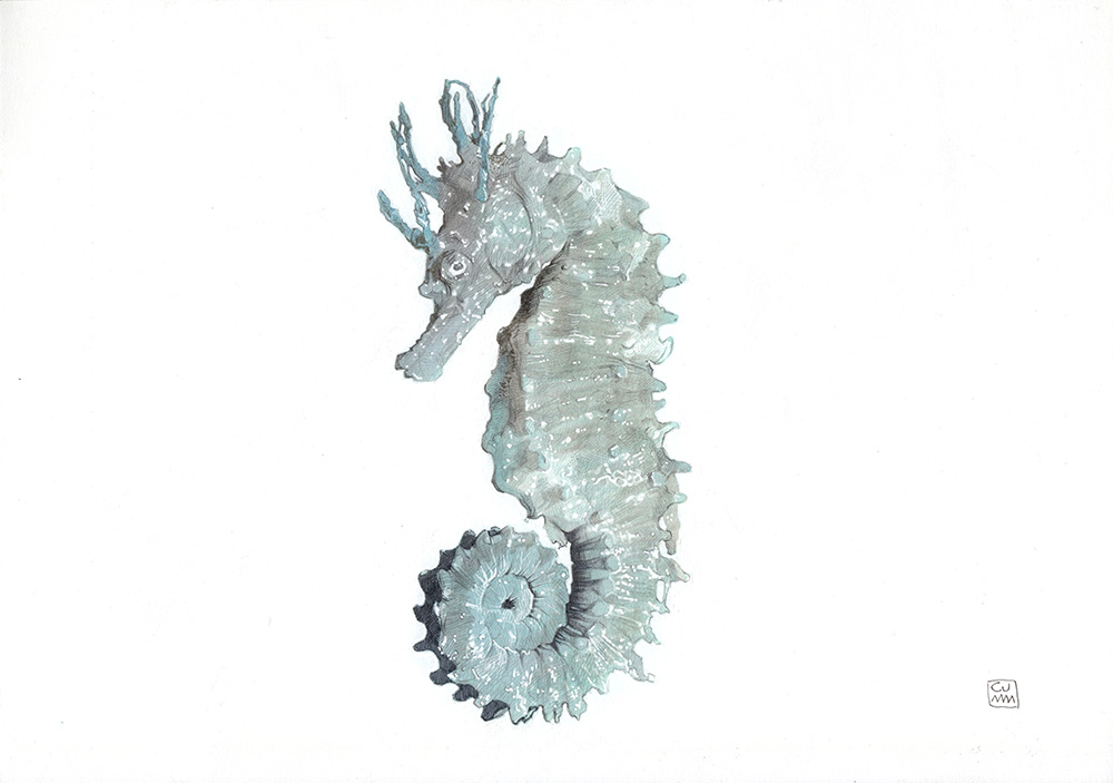 Long Snouted Seahorse The Life Underwater Drawing Illustration