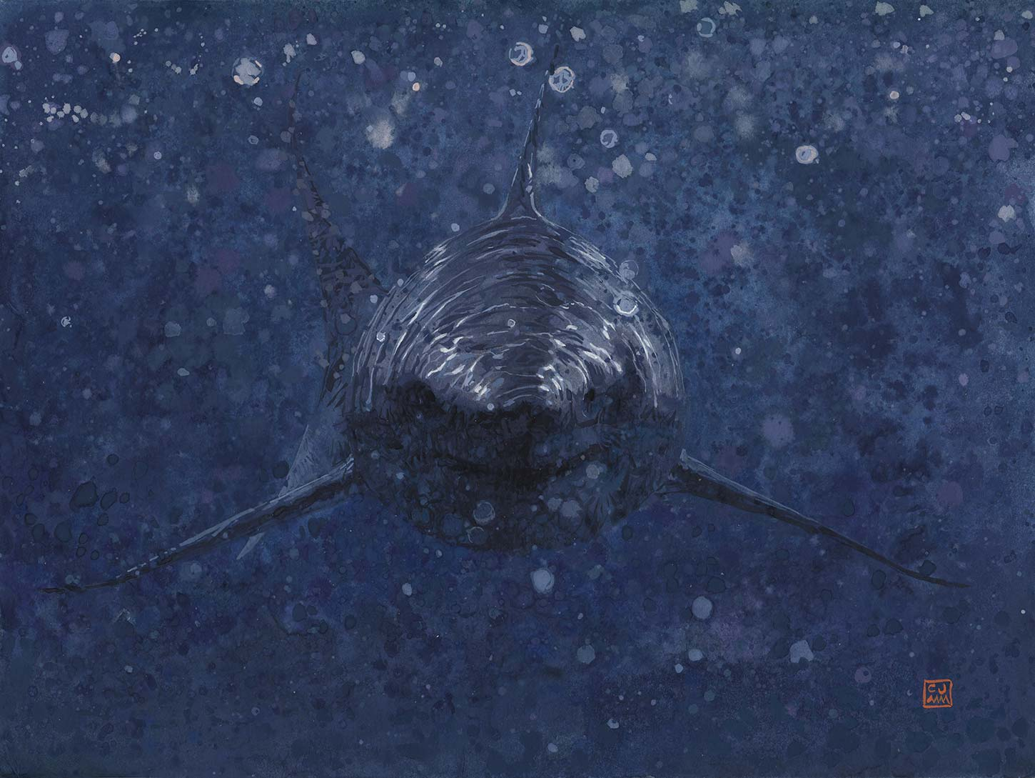 Carcharodon Carcharias The Life Underwater Drawing Illustration Project by CJMM Carlos J Marquez
